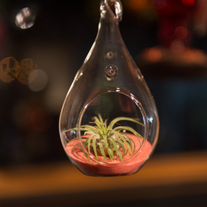 custom_air_plant_terrarium_pink_sand