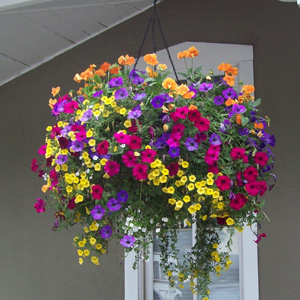 custom_annual_hanging_basket_0