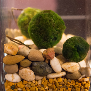 custom_moss_ball_terrarium_natural_stones