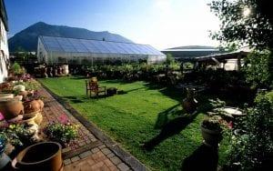 garden center grass