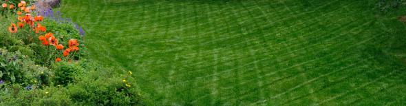 lawn-crop